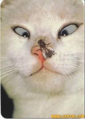 Chat...chat... dans Images droles. 7xx1cegu